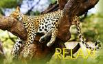 Relax!:12