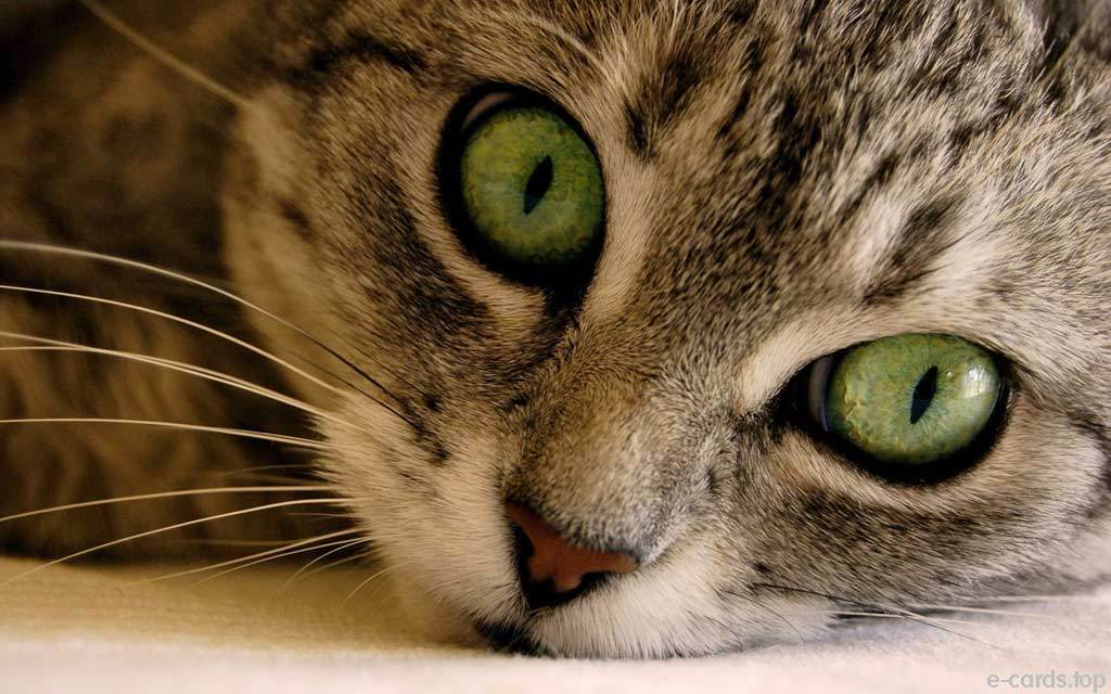 Wallpaper: Nette Tiere