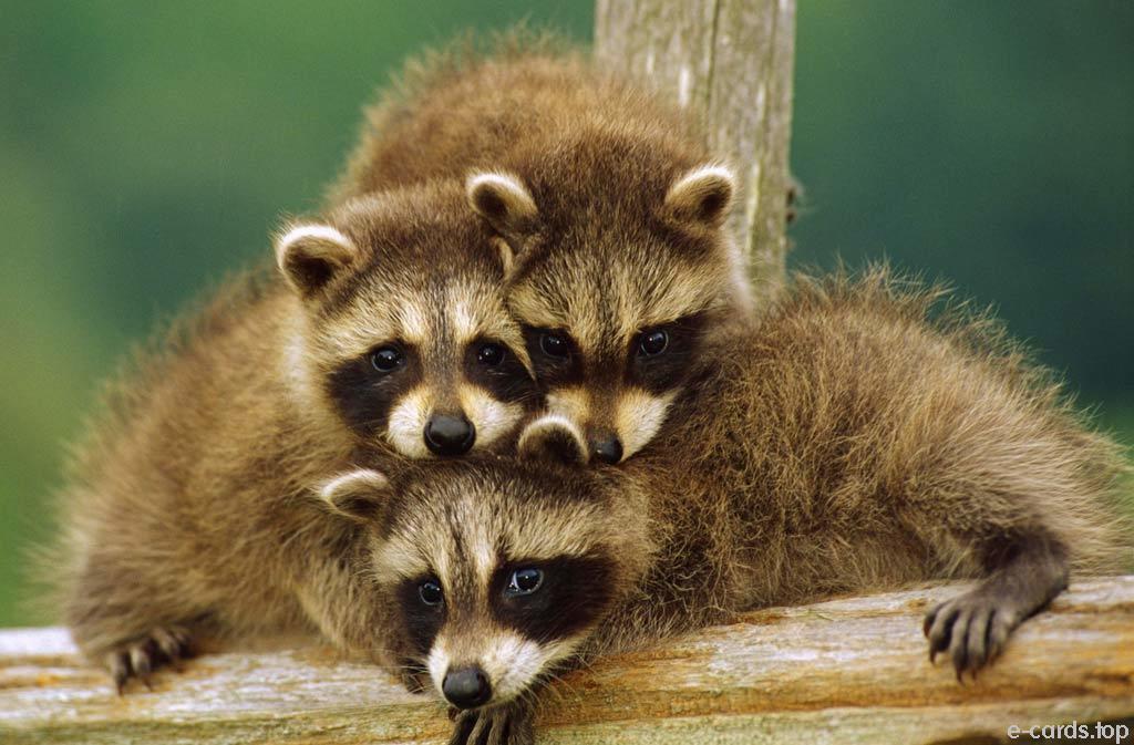 WP: Animals