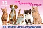 День домашних животных:0
