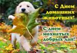 День домашних животных:6