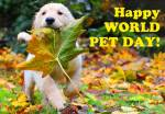 World Pet Day:6
