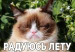 Угрюмый кот:8