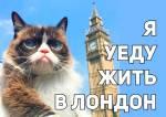 Угрюмый кот:14