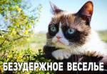 Угрюмый кот:15