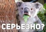 Удивлённые животные:15