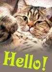 Hello!:9