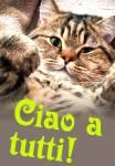 Ciao!:7