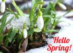 The beginning of spring:11