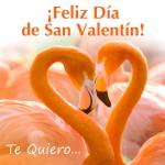 Día de San Valentín:9