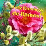 Domingo de Ramos:1