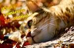 Principios de otoño:9