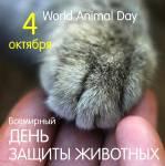 Всемирный день животных:0