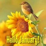 January. Summer:6