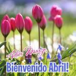 Abril Primavera:10