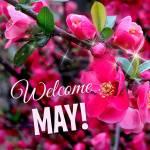 May:1