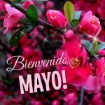 Mayo:1