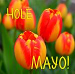 Mayo:2