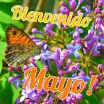 Mayo:5