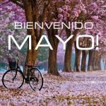 Mayo:6