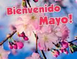 Mayo:11