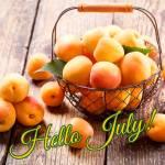 July:11