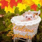 September:3