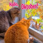 Oktober:11