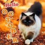October:1