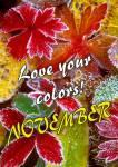 November:0
