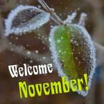 November:9