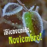 Noviembre:9