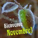Novembre:9