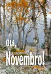 Novembro:13