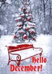 December Winter:2