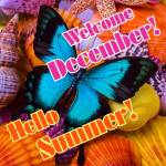 December Summer:3